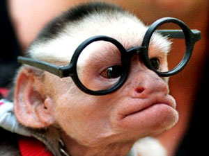 Monkey With Glasses